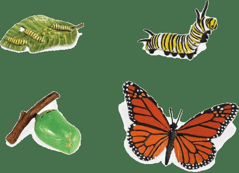 SAFARI Ltd. Životní cyklus - Motýl  a83eee2a4a