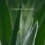 DUREX Play Masážní gel 2 v 1 – Aloe Vera, 200 ml